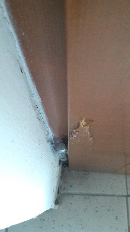 dveře - prasklé